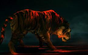 Picture tiger, background, predator, art