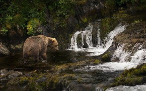 Picture river, Alaska, cascade, Brown bear, Kodiak