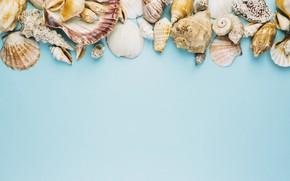 Picture summer, background, shell, summer, beach, marine, composition, seashells