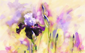 Picture flower, purple, flowers, figure, graphics, treatment, picture, art, painting, buds, irises, drawing, strokes, digital painting, …