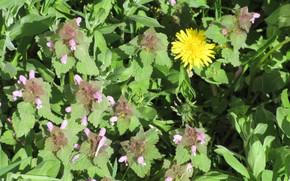 Picture flowers, meadow, grass, spring 2018, meduzanol ©