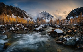 Picture forest, mountains, nature, river