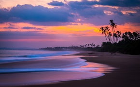 Wallpaper sea, beach, the sky, clouds, palm trees, the ocean, the evening