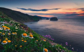 Picture sunset, flowers, the ocean, coast, Spain, Spain, The Bay of Biscay, Bay of Biscay, Bizkaia, …
