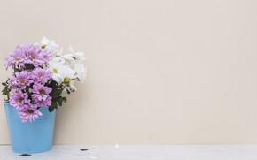 Picture flowers, bouquet, pot, Chrysanthemum