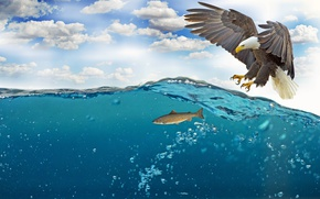 Picture sea, the sky, water, clouds, bubbles, bird, wings, fish, feathers, beak, claws, hunting, bald eagle