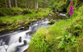 Wallpaper greens, forest, summer, grass, trees, flowers, stream, stones, moss, Scotland, Cairngorms National Park