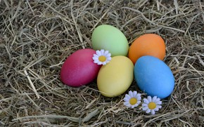 Picture flowers, holiday, eggs, Daisy, Easter, hay