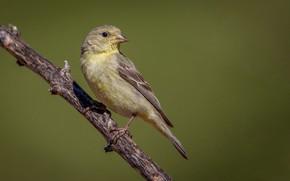 Picture bird, branch, beak, tail