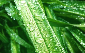 Picture drops, macro, plants, AristovArt, drops on the grass