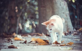 Picture autumn, cat, cat, leaves, kitty, bokeh