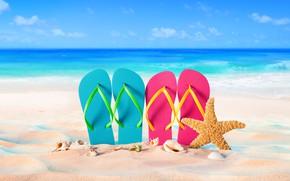 Wallpaper sand, sea, beach, summer, stay, shell, summer, beach, vacation, sand, slates, vacation, starfish, seashells