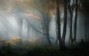 Wallpaper forest, trees, nature, haze