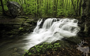 Picture forest, trees, waterfall, Nature