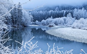 Wallpaper forest, river, branches, blue, shore, trees, fog, winter, snow