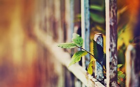 Picture summer, the sun, light, the fence, plant, branch, fence, blur