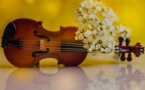 Wallpaper spring, violin, petals, flowers