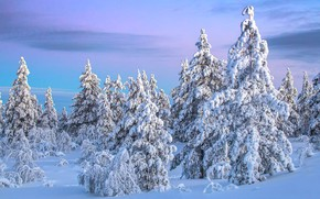Picture winter, the sky, snow, tree