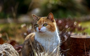 Picture cat, summer, beauty