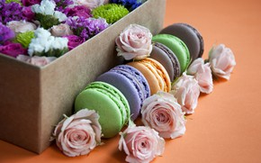 Picture box, roses, cake, macaroon