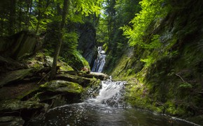 Picture forest, water, trees, stones, waterfall