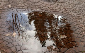 Picture Autumn, Puddle, Water reflection
