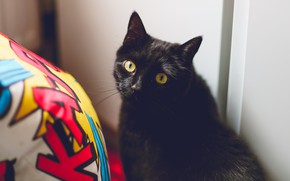 Picture eyes, cat, look, yellow
