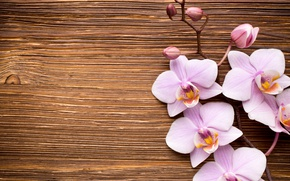Picture wood, Orchid, pink, flowers, orchid