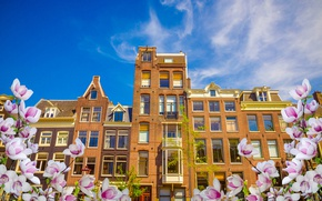 Picture spring, Amsterdam, flowering, blossom, Amsterdam, flowers, old, spring, buildings, Netherlands