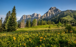 Picture greens, the sky, grass, the sun, trees, flowers, mountains, rocks, Austria, Alps, meadow