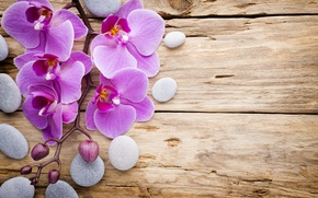 Picture stones, wood, Orchid, pink, flowers, orchid
