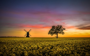 Picture sunset, tree, mill, rape