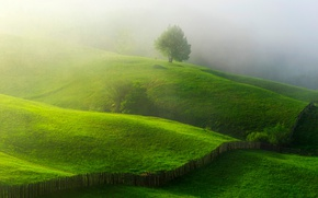 Wallpaper greens, summer, nature, fog, tree, spring, morning