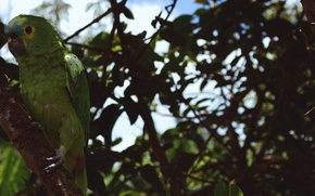 Picture branches, green, tree, feathers, parrot