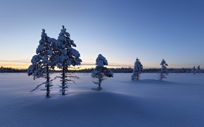 Picture winter, snow, morning, Finland, Lapland