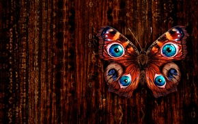 Picture butterfly, figure, texture, art, Diana Shutka
