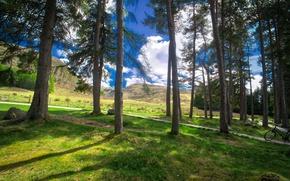 Picture Nature, Grass, Trees, Scotland