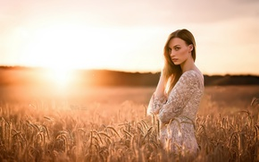 Picture field, girl, sunset, ears
