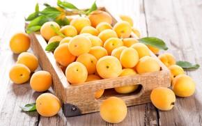Picture light, box, fruit, apricots, apricots