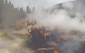 Picture nature, fog, skull, wolf, deer, by vocalsong