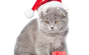 Picture cat, hat, glasses, New year, Christmas, cats