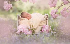 Picture flowers, branches, sleep, Sakura, baby, flowering, baby, cot, sleep