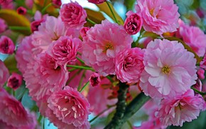 Picture leaves, branch, flowers, blooming twig