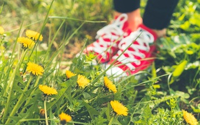 Picture summer, grass, shoes, sneakers, pink, dandelions