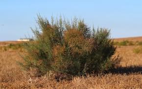Wallpaper the steppe, grass, the sky, Bush
