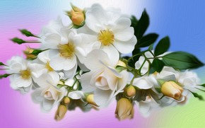 Picture Graphics, Roses, White, Rozmyte