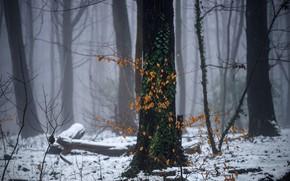 Wallpaper winter, forest, snow, haze
