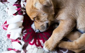 Picture sleep, baby, puppy