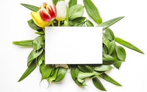 Picture flowers, bouquet, tulips, leaves, tulips, paper, sheet