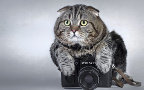 Picture Cat, The camera, Grey